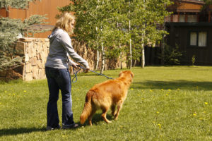 Loose leash walking a dog